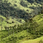 valle del cocora bosque de plameras