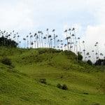 valle del cocora como llegar