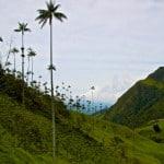 valle del cocora paisaje