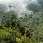 valle del cocora parque