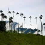 valle del cocora plameras gigantes