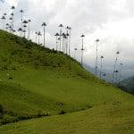 valle del cocora quindio
