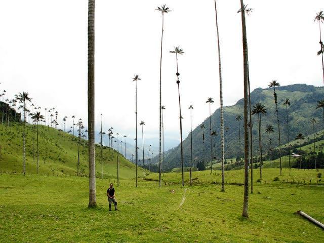 valle del cocora tamaño