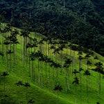 valle del cocora ubicacion