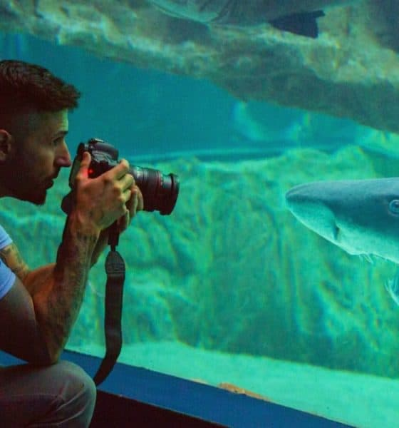 Tiburón en acuario