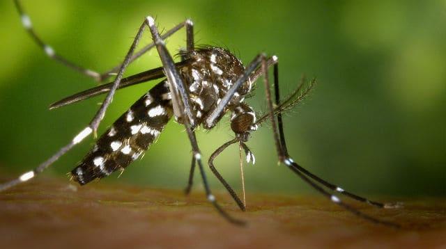 virus zika 02
