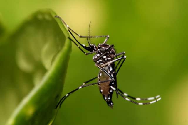 zika 03 picadura