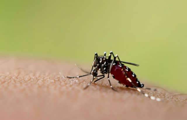 zika 04 mosco