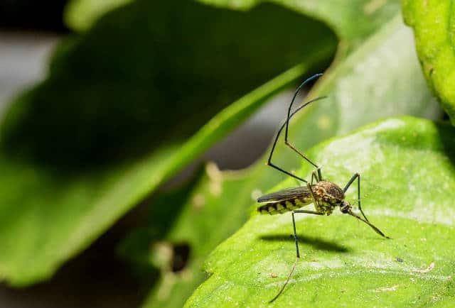 Consejos de viaje para alejar a los mosquitos y sus piquetes - Como ahuyentar a los mosquitos ...