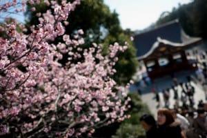 erezos Japon Kamakura foto Matt Greenfield
