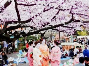 Cerezos Japon Ueno foto D Thomas Johnson