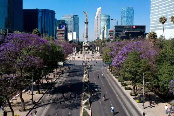 Jacarandas Foto Quia Inm 3