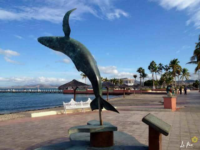 Malecon La Paz ballena jorobada Foto VivaLaPaz