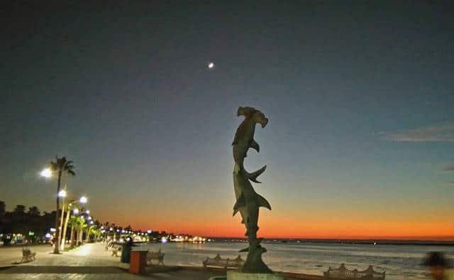 Malecon La Paz tiburones martillo Foto VivaLaPaz