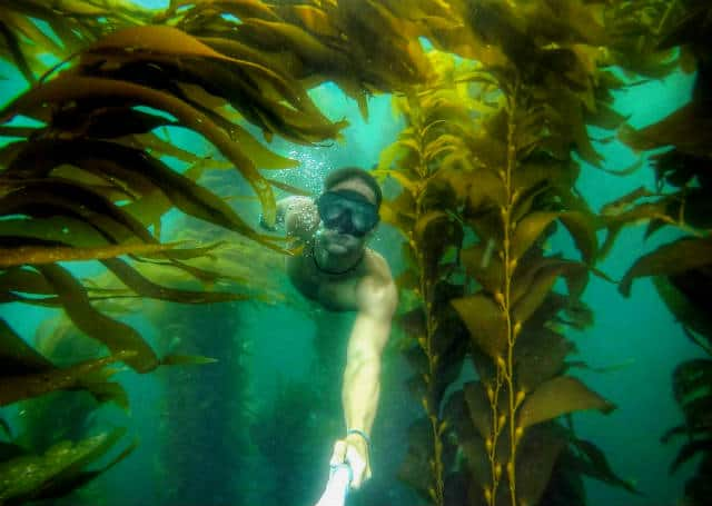 bosques de algas marinas gopro