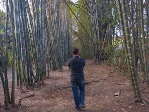 cascada el meco slp bambus