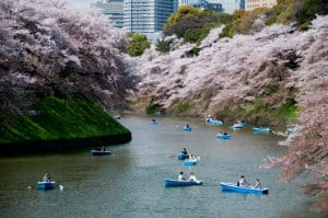cerezos japon Chidorigafuchi foto Kanegen