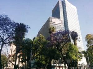 jacarandas cdmx foto Julio Garcia Castillo 21
