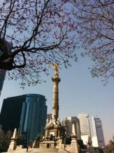 jacarandas cdmx foto Julio Garcia Castillo 28