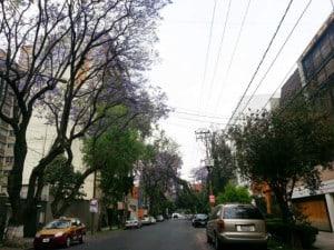 jacarandas cdmx foto Julio Garcia Castillo 4