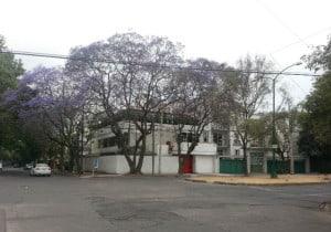 jacarandas cdmx foto Julio Garcia Castillo 5