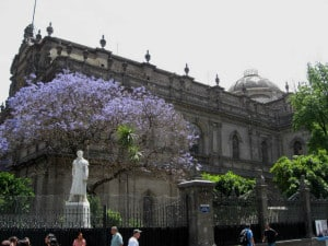 jacararandas antigua biblioteca nacional foto Paola Farrera