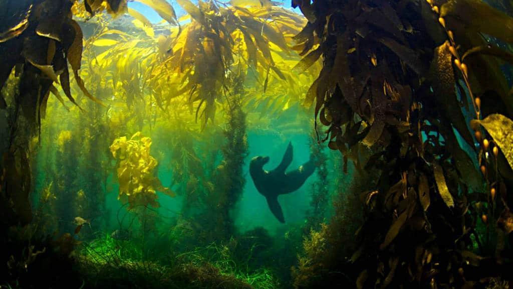 portada bosques de algas foto Octavia Alburto