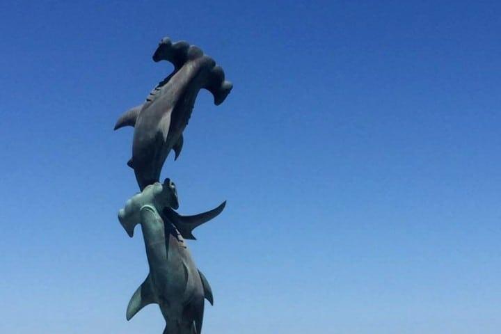 tiburones-martillo-foto-viajeros-en-ruta-9