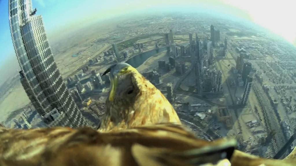 vuelo de aguila en dubai