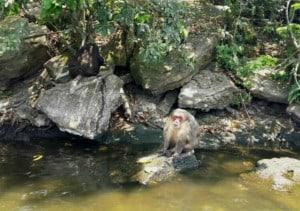 Nanciyaga monos