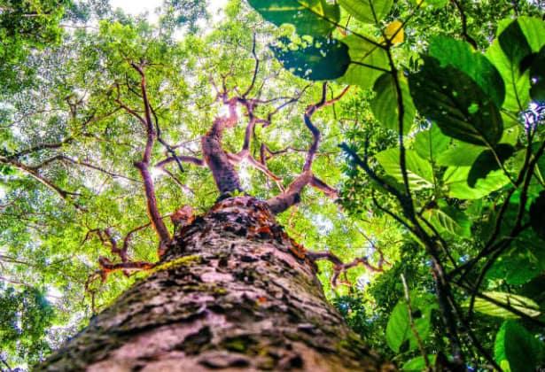 Nanciyaga selva
