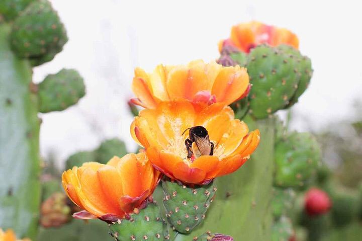 Jardín etnobotánico en Oaxaca FOTO: JEO