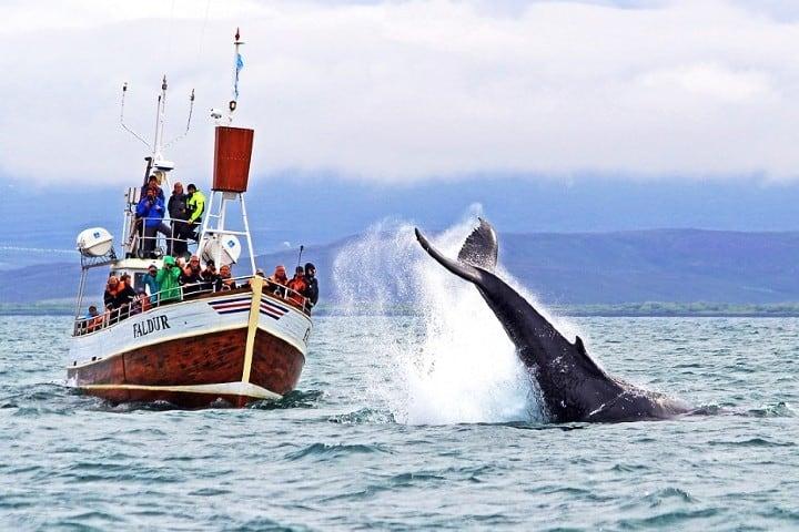 Después-de-avistar-a-las-ballenas-barco-se-estrella-en-muelle-de-san-diego-foto-punto-medio-3