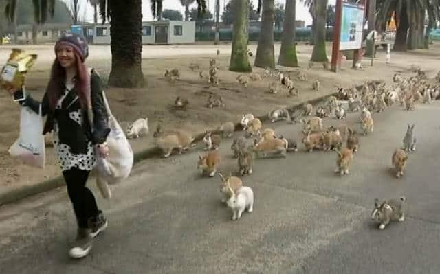 isla conejo corriendo