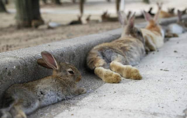 isla conejo durmiendo