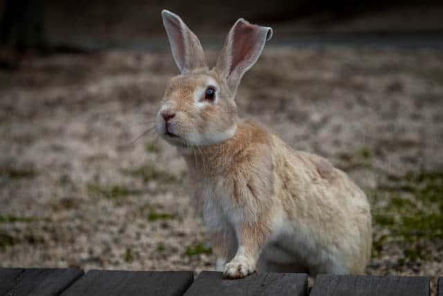 isla conejo hambre