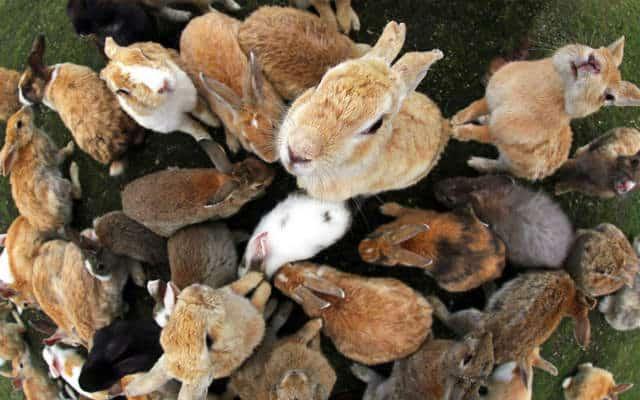 isla conejo hambrientos