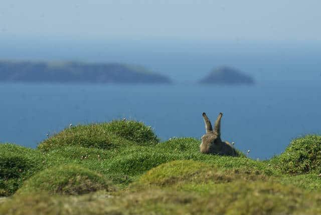 isla conejo mar
