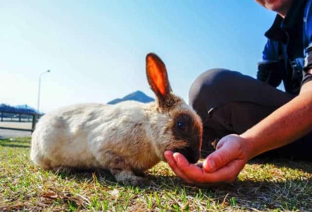 isla conejo pequeño