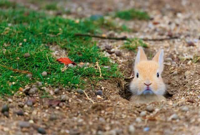 isla conejo refugio