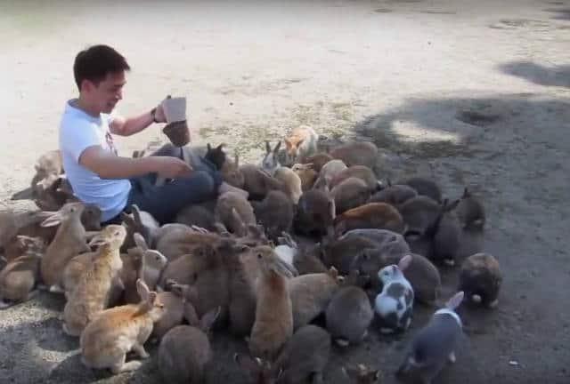 isla conejo rodeado