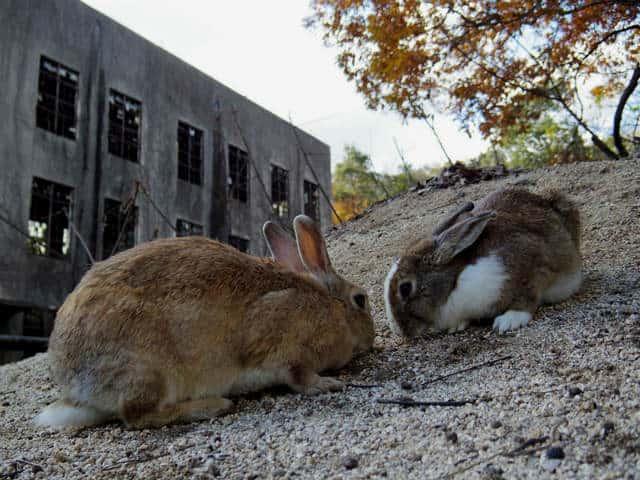 sla conejos fabrica Foto Eugene YK Wong