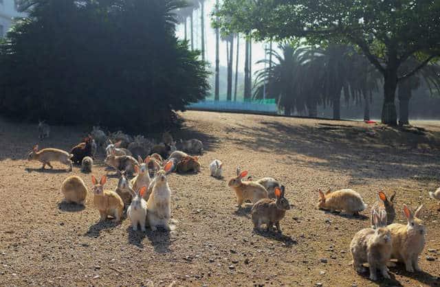 isla conejos foto Claudia Lee