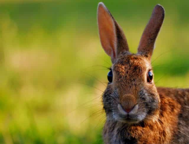 isla conejos foto hjhispste