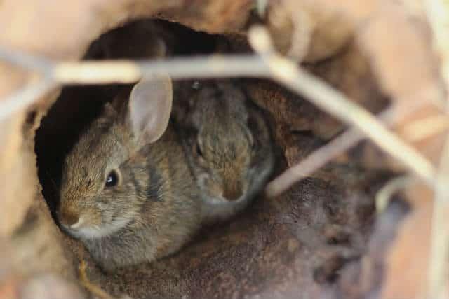 isla conejos madrigueras