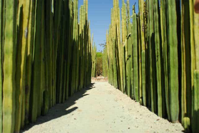 jardin etnobotanico Foto Mrcos Ojada