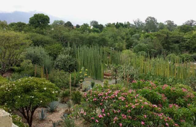 Plantas ex ticas en jard n etnobot nico de oaxaca for Jardin oaxaca