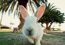 Rabbit island isla conejo