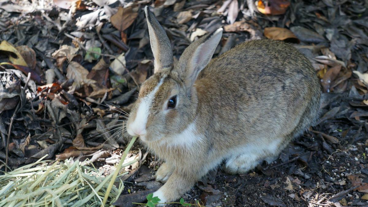 rabbit-1174667_1920