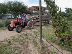 Cuna de tierra trabajador